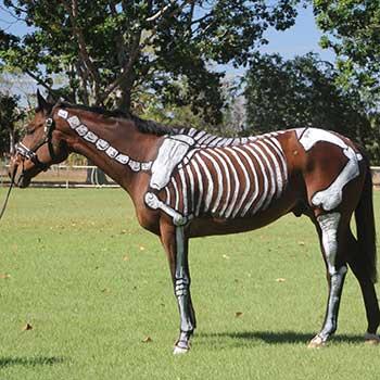 Equestrian NT