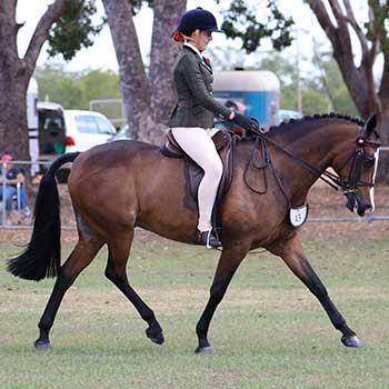 NT Show Horse Association